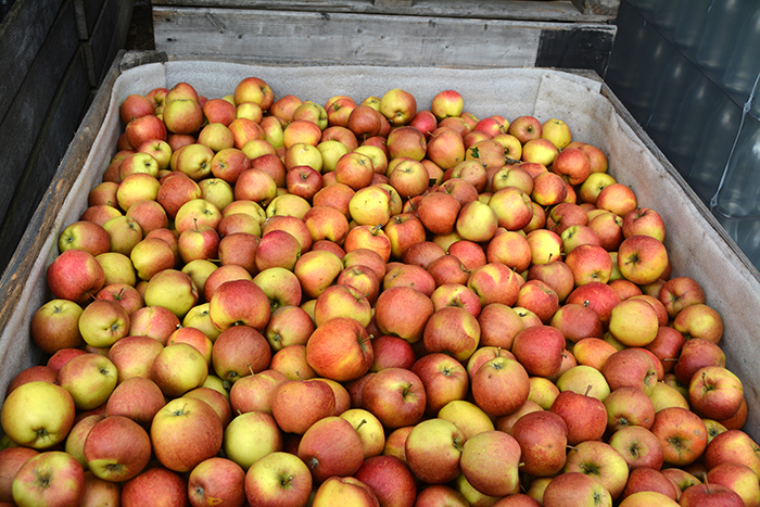 Pommes-Wapi-02